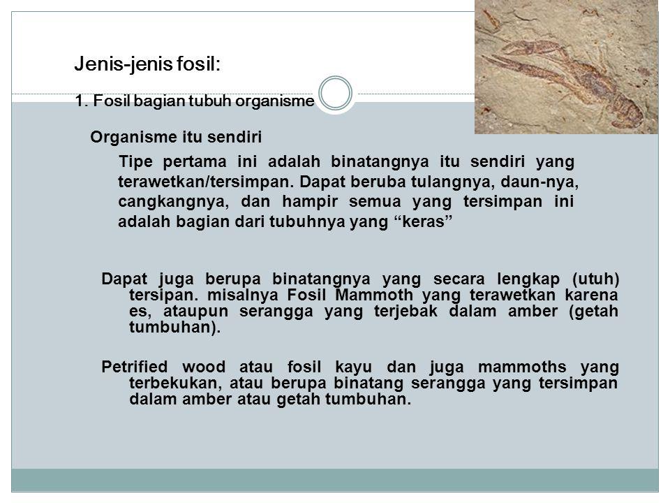 Jenis-jenis fosil: 1. Fosil bagian tubuh organisme Organisme itu sendiri Tipe pertama ini adalah binatangnya itu sendiri yang terawetkan/tersimpan. Da