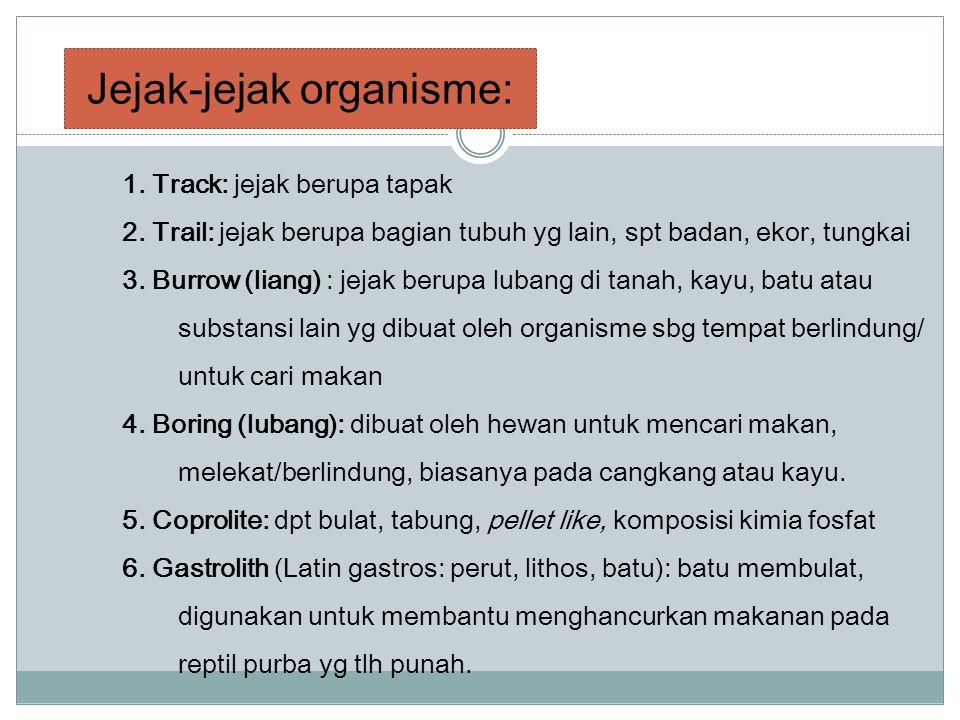 1. Track: jejak berupa tapak 2. Trail: jejak berupa bagian tubuh yg lain, spt badan, ekor, tungkai 3. Burrow (liang) : jejak berupa lubang di tanah, k