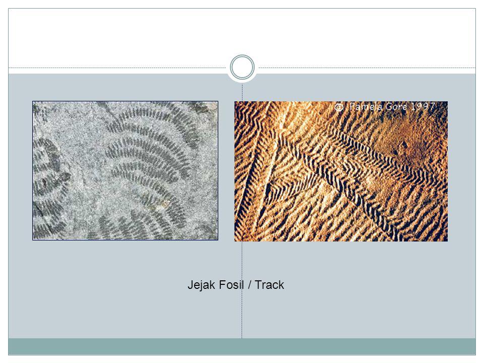 Jejak Fosil / Track