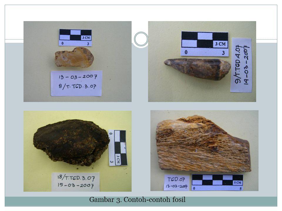 Gambar 3. Contoh-contoh fosil