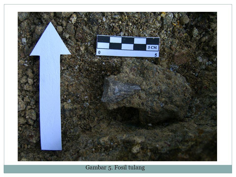 Gambar 5. Fosil tulang