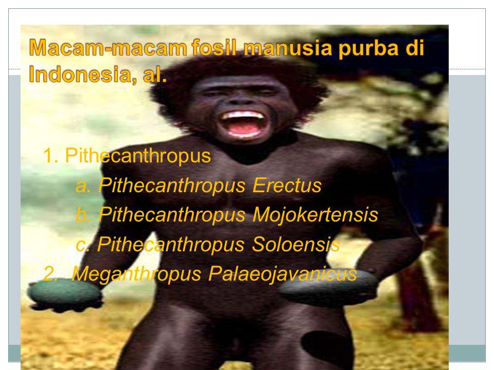 1. Pithecanthropus a. Pithecanthropus Erectus b. Pithecanthropus Mojokertensis c. Pithecanthropus Soloensis 2. Meganthropus Palaeojavanicus