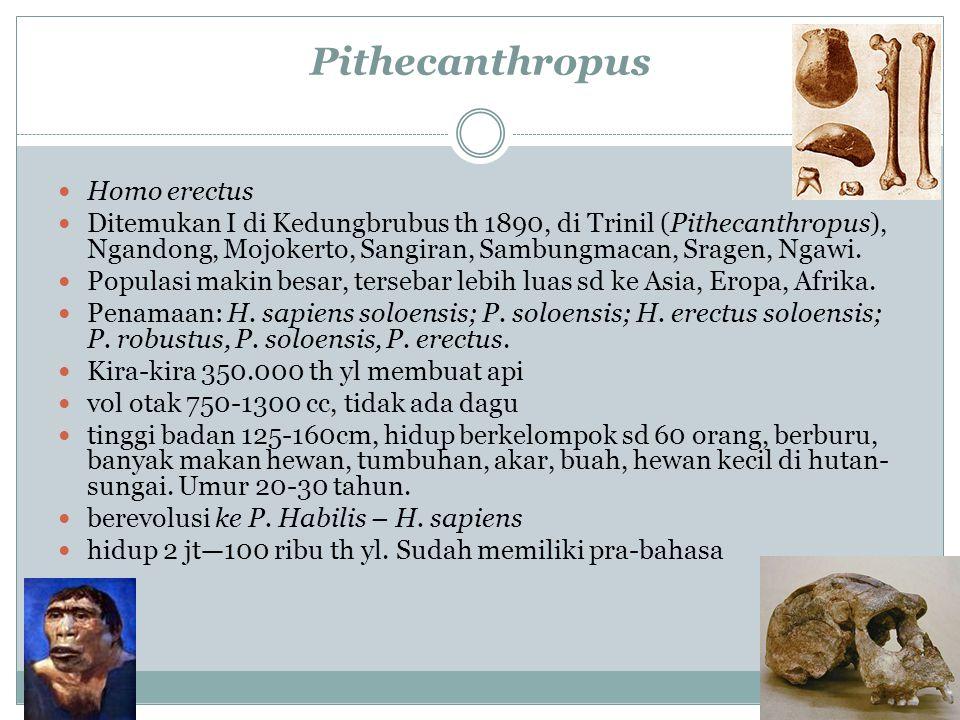 Pithecanthropus Homo erectus Ditemukan I di Kedungbrubus th 1890, di Trinil (Pithecanthropus), Ngandong, Mojokerto, Sangiran, Sambungmacan, Sragen, Ng
