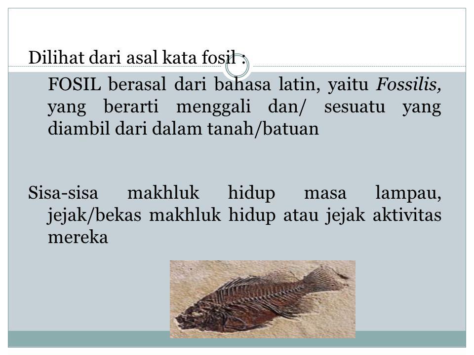 FOSIL Dilihat dari asal kata fosil : FOSIL berasal dari bahasa latin, yaitu Fossilis, yang berarti menggali dan/ sesuatu yang diambil dari dalam tanah