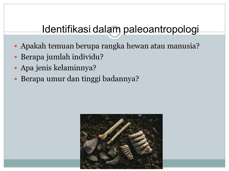 Identifikasi dalam paleoantropologi Apakah temuan berupa rangka hewan atau manusia? Berapa jumlah individu? Apa jenis kelaminnya? Berapa umur dan ting
