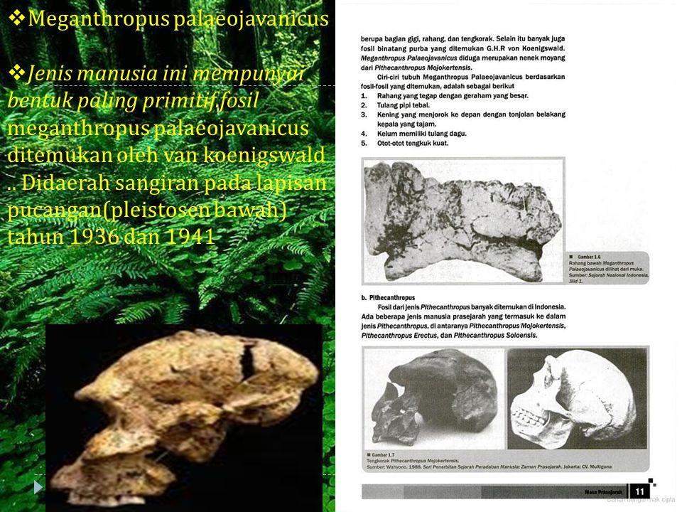  Meganthropus palaeojavanicus  Jenis manusia ini mempunyai bentuk paling primitif.fosil meganthropus palaeojavanicus ditemukan oleh van koenigswald.