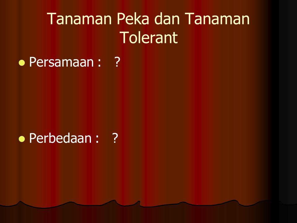 Tanaman Peka dan Tanaman Tolerant Persamaan : ? Perbedaan : ?