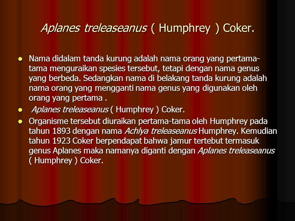 Aplanes treleaseanus ( Humphrey ) Coker. Nama didalam tanda kurung adalah nama orang yang pertama- tama menguraikan spesies tersebut, tetapi dengan na