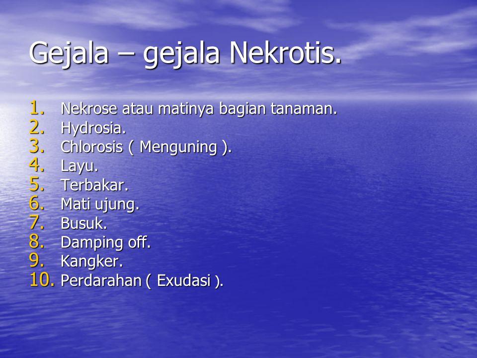 Gejala – gejala Nekrotis. 1. Nekrose atau matinya bagian tanaman. 2. Hydrosia. 3. Chlorosis ( Menguning ). 4. Layu. 5. Terbakar. 6. Mati ujung. 7. Bus
