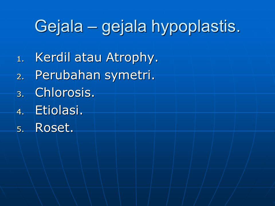 Gejala – gejala hypoplastis. 1. Kerdil atau Atrophy. 2. Perubahan symetri. 3. Chlorosis. 4. Etiolasi. 5. Roset.
