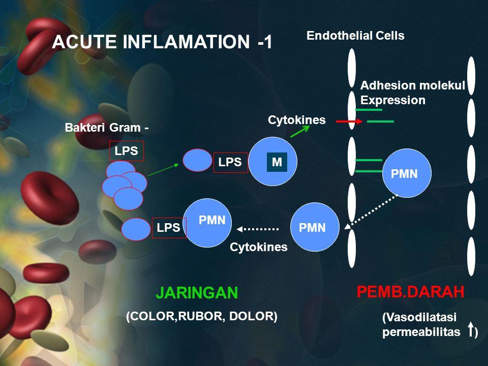 LPS Bakteri Gram - M Cytokines Adhesion molekul Expression PMN PEMB.DARAH JARINGAN Cytokines Endothelial Cells (Vasodilatasi permeabilitas ) (COLOR,RU