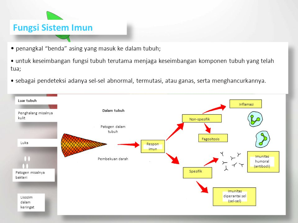 "Fungsi Sistem Imun penangkal ""benda"" asing yang masuk ke dalam tubuh; untuk keseimbangan fungsi tubuh terutama menjaga keseimbangan komponen tubuh yan"