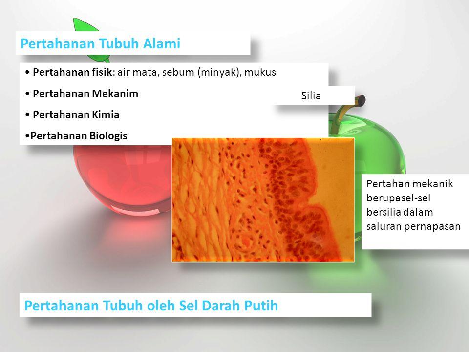 Penisilin merupakan hasil produksi suatu jenis jamur.