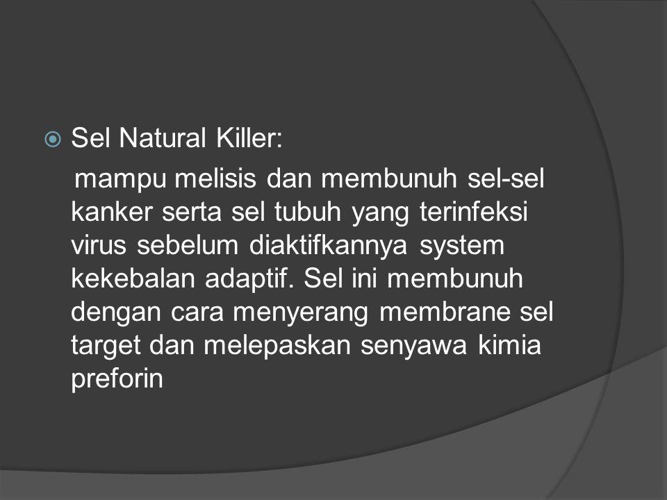  Sel Natural Killer: mampu melisis dan membunuh sel-sel kanker serta sel tubuh yang terinfeksi virus sebelum diaktifkannya system kekebalan adaptif.