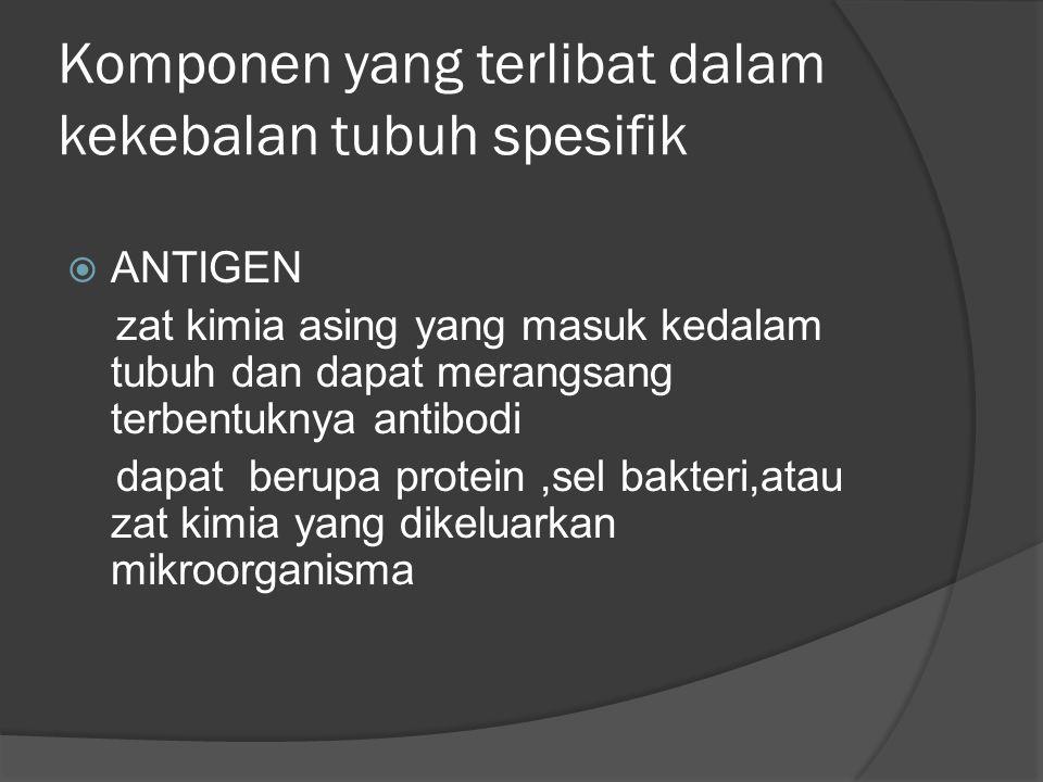 Komponen yang terlibat dalam kekebalan tubuh spesifik  ANTIGEN zat kimia asing yang masuk kedalam tubuh dan dapat merangsang terbentuknya antibodi dapat berupa protein,sel bakteri,atau zat kimia yang dikeluarkan mikroorganisma