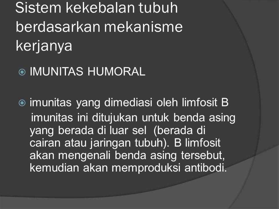 Sistem kekebalan tubuh berdasarkan mekanisme kerjanya  IMUNITAS HUMORAL  imunitas yang dimediasi oleh limfosit B imunitas ini ditujukan untuk benda asing yang berada di luar sel (berada di cairan atau jaringan tubuh).