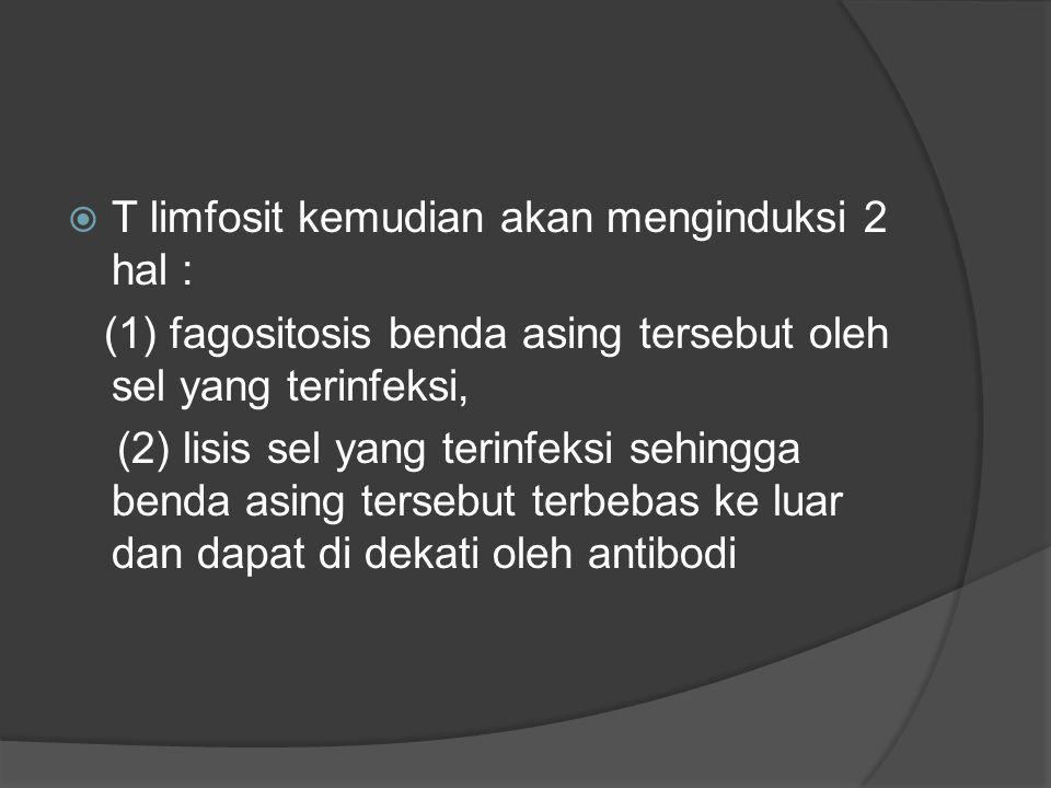  T limfosit kemudian akan menginduksi 2 hal : (1) fagositosis benda asing tersebut oleh sel yang terinfeksi, (2) lisis sel yang terinfeksi sehingga benda asing tersebut terbebas ke luar dan dapat di dekati oleh antibodi