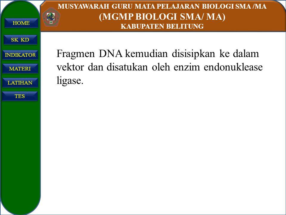 MUSYAWARAH GURU MATA PELAJARAN BIOLOGI SMA /MA (MGMP BIOLOGI SMA/ MA) KABUPATEN BELITUNG SK KD INDIKATO R INDIKATO R MATERI LATIHAN TES HOME Fragmen D