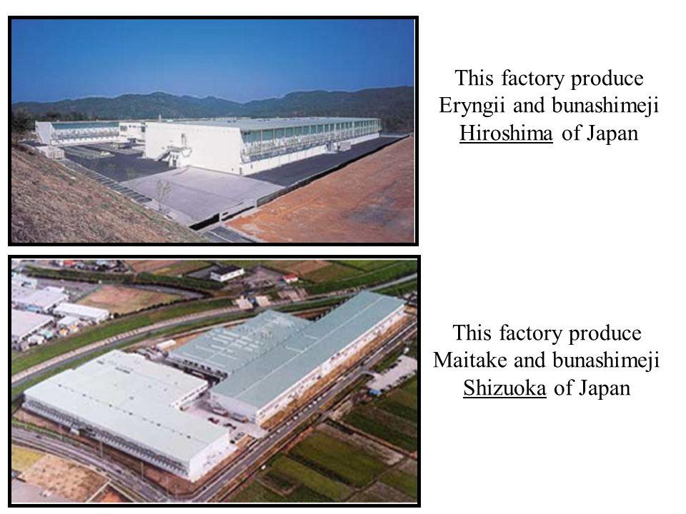 This factory produce Eryngii and bunashimeji Hiroshima of Japan This factory produce Maitake and bunashimeji Shizuoka of Japan