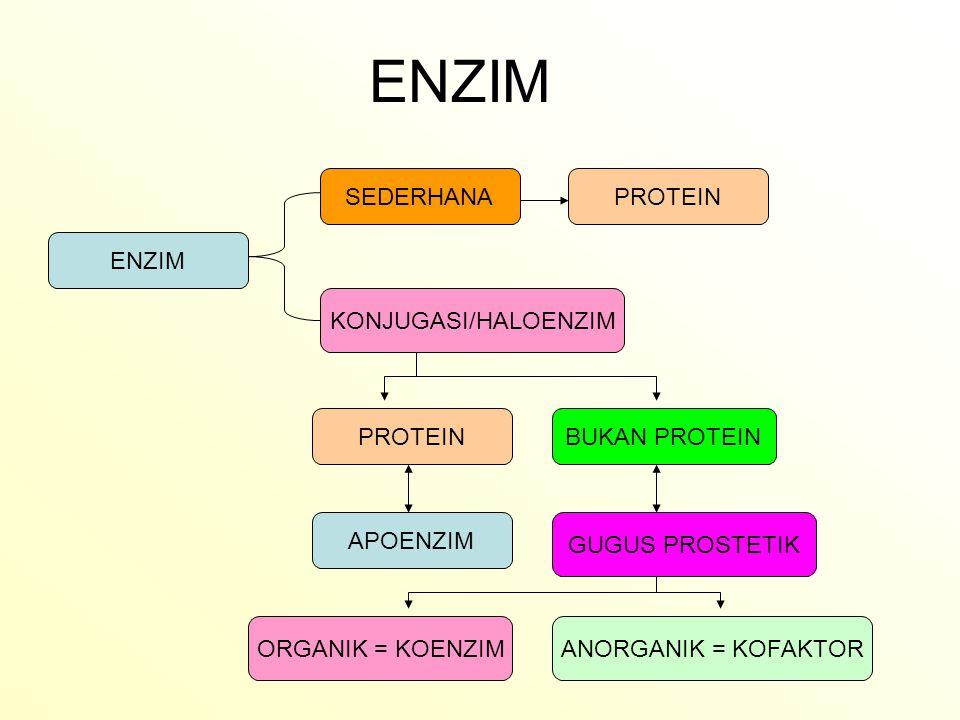 KOENZIM : -Coenzyme A -Flavin mononucleotide -Flavin Adenine dinucleotide -Nicotinamide adenine dinucleotide -Adinine dinucleotide phosphat -Thiamine pyrophosphat -Tetrahydrofolate -Deoxyadenosyl cobalamin -Pyridoxal phosphat KOFAKTOR - Zn2+ - Fe2+