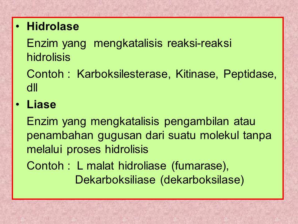 Hidrolase Enzim yang mengkatalisis reaksi-reaksi hidrolisis Contoh : Karboksilesterase, Kitinase, Peptidase, dll Liase Enzim yang mengkatalisis pengambilan atau penambahan gugusan dari suatu molekul tanpa melalui proses hidrolisis Contoh : L malat hidroliase (fumarase), Dekarboksiliase (dekarboksilase)