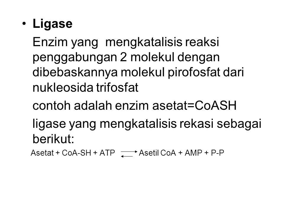 Ligase Enzim yang mengkatalisis reaksi penggabungan 2 molekul dengan dibebaskannya molekul pirofosfat dari nukleosida trifosfat contoh adalah enzim asetat=CoASH ligase yang mengkatalisis rekasi sebagai berikut: Asetat + CoA-SH + ATP Asetil CoA + AMP + P-P