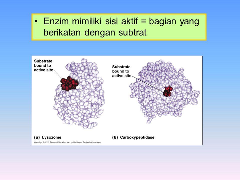 Mekanisme kerja enzim E + S ES E + P Dua model ikatan enzim