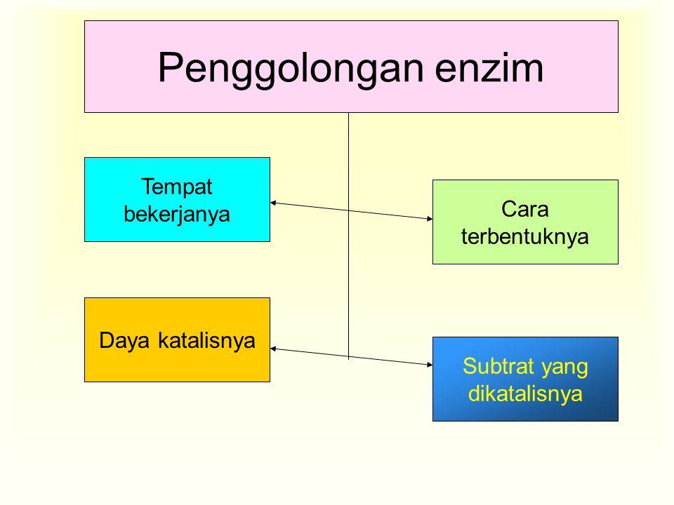 Penggolongan enzim Tempat bekerjanya Cara terbentuknya Subtrat yang dikatalisnya Daya katalisnya