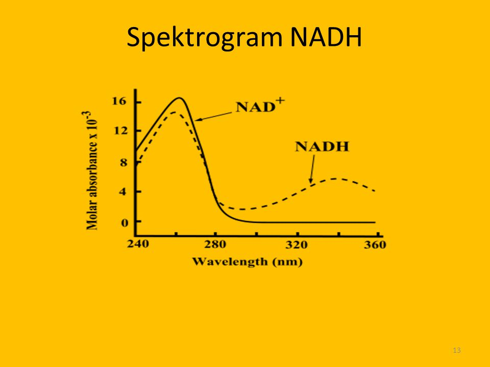 Spektrogram NADH 13