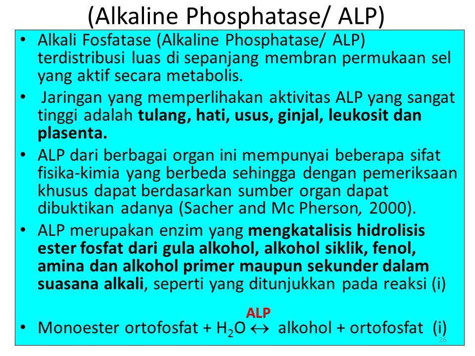(Alkaline Phosphatase/ ALP) Alkali Fosfatase (Alkaline Phosphatase/ ALP) terdistribusi luas di sepanjang membran permukaan sel yang aktif secara metabolis.