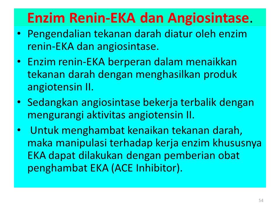 Enzim Renin-EKA dan Angiosintase.