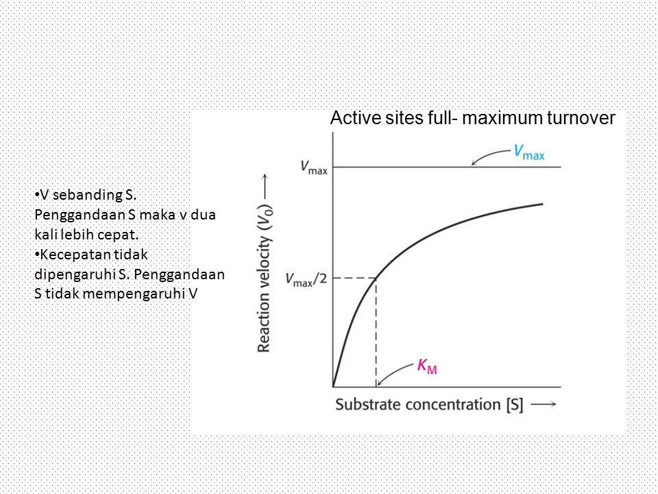 V sebanding S. Penggandaan S maka v dua kali lebih cepat. Kecepatan tidak dipengaruhi S. Penggandaan S tidak mempengaruhi V Active sites full- maximum