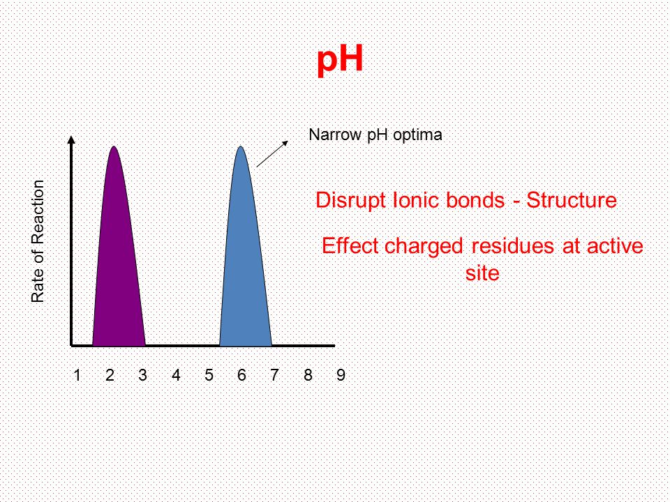 Rate of Reaction pH 1 342 5 6 789 Narrow pH optima Disrupt Ionic bonds - Structure Effect charged residues at active site