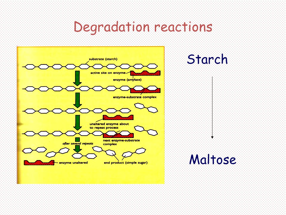 Degradation reactions Starch Maltose
