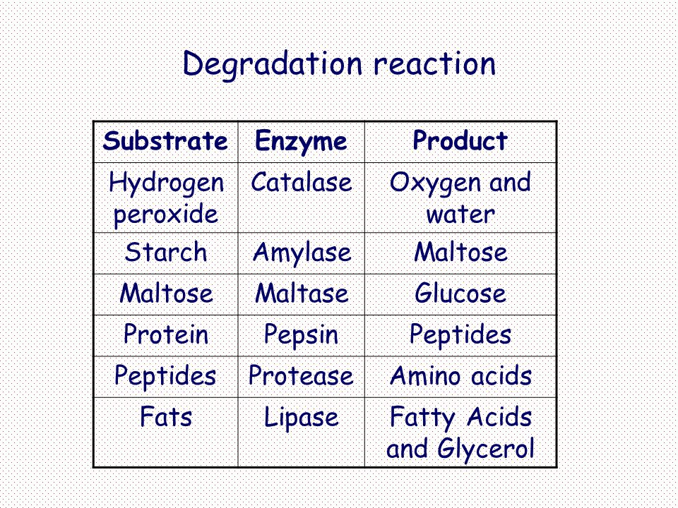 Degradation reaction SubstrateEnzymeProduct Hydrogen peroxide CatalaseOxygen and water StarchAmylaseMaltose MaltaseGlucose ProteinPepsinPeptides ProteaseAmino acids FatsLipaseFatty Acids and Glycerol