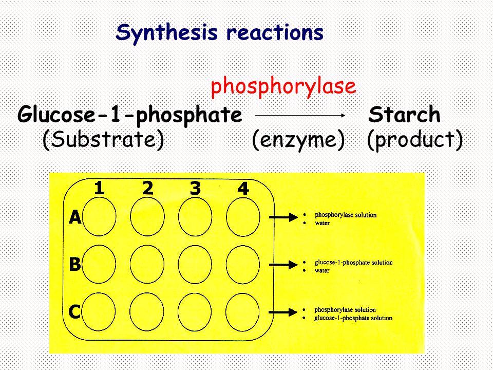 2.Pengaruh konsentrasi substrat Kecepatan sebanding dengan konsentrasi substrat.