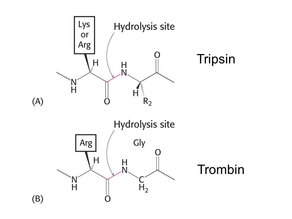 Komposisi enzim Holoenzim = Apoenzim + kofaktor