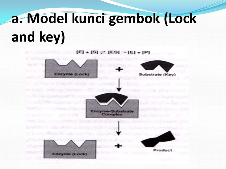 b. Induksi pas (model induced fit)