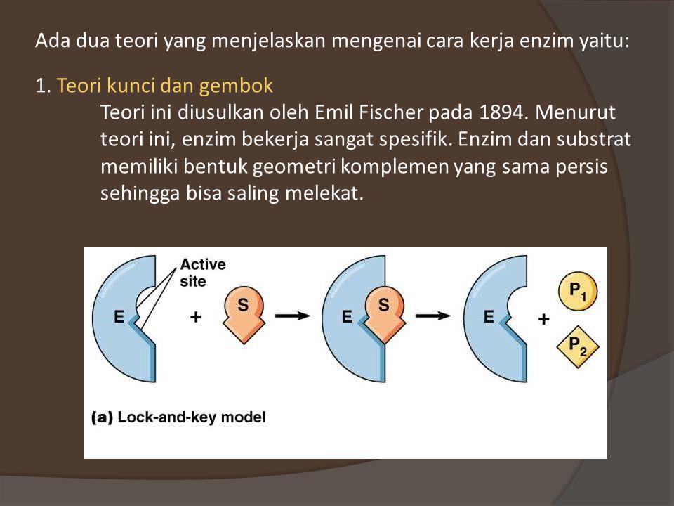 Ada dua teori yang menjelaskan mengenai cara kerja enzim yaitu: 1.
