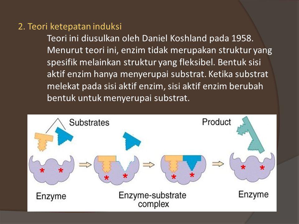 2.Teori ketepatan induksi Teori ini diusulkan oleh Daniel Koshland pada 1958.