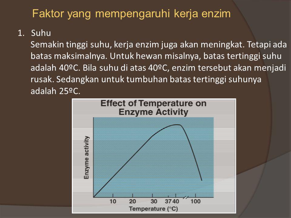 Faktor yang mempengaruhi kerja enzim 1.Suhu Semakin tinggi suhu, kerja enzim juga akan meningkat.
