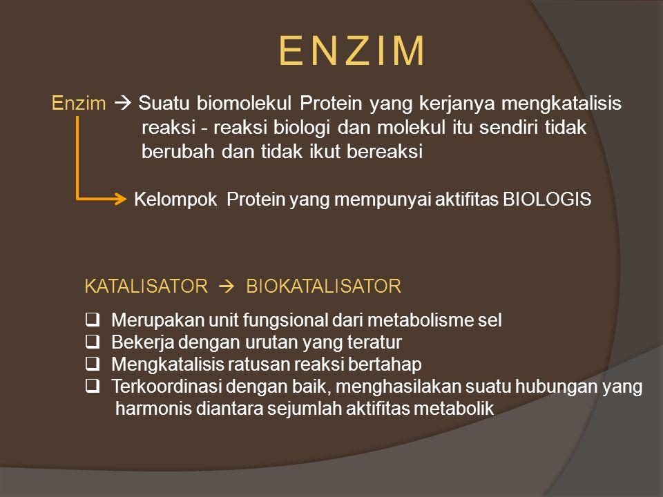 PRINSIP KERJA ENZIM Reaksi enzimatis ( reaksi yang dikatalisis enzim) tidak turut dalam reaksi tetapi kombinasi S + E S – E (kompleks) P + E S (substrat) : Zat yang mengalami perubahan kimiawi akibat aktifita suatu enzim P (produk ) : zat yang terbentuk pada reaksi enzimatis, pada saat reaksi sudah dalam keseimbangan Sesudah reaksi selesai, enzim E tidak mengalami perubahan struktur.