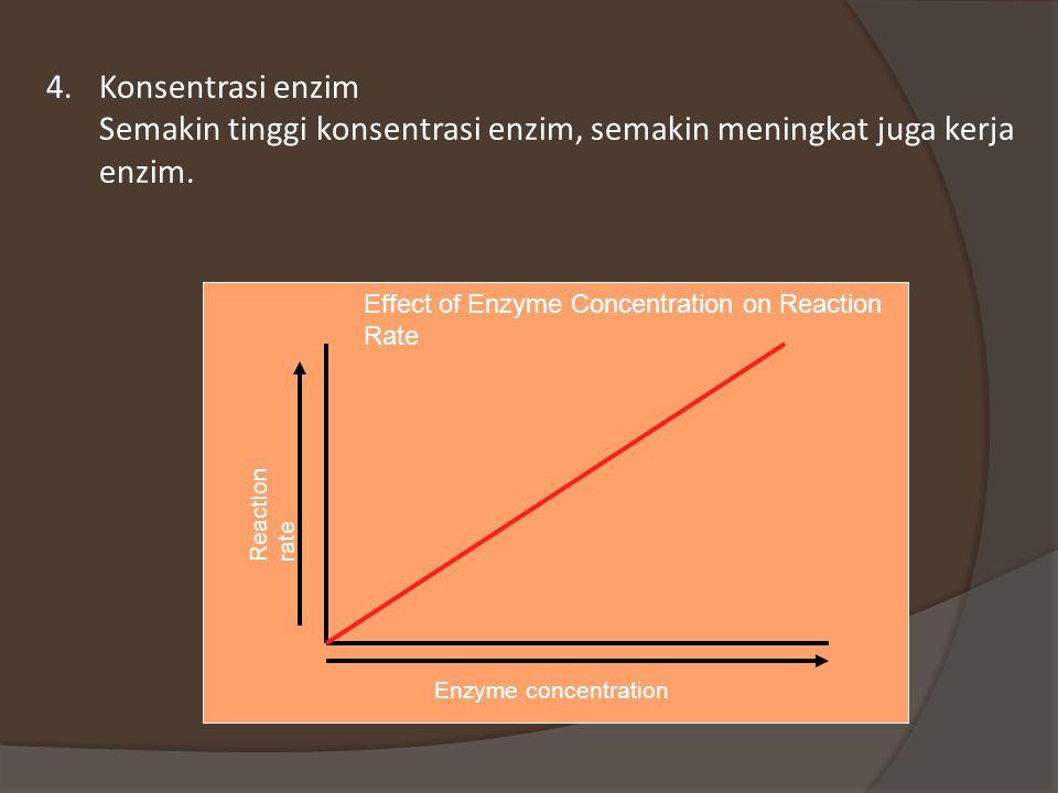 4.Konsentrasi enzim Semakin tinggi konsentrasi enzim, semakin meningkat juga kerja enzim.