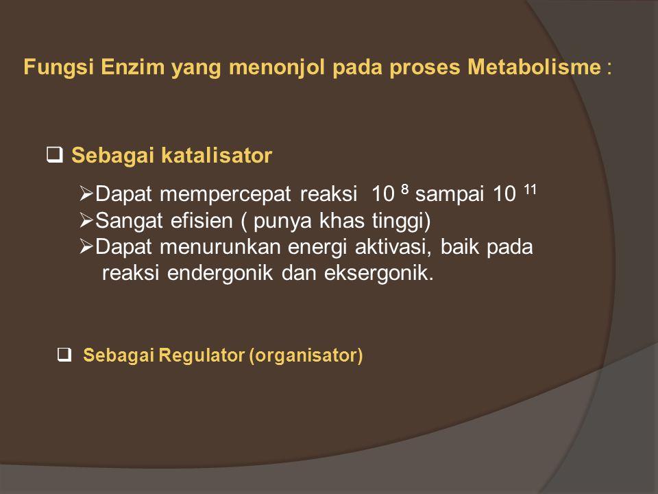 Fungsi Enzim yang menonjol pada proses Metabolisme :  Sebagai katalisator  Dapat mempercepat reaksi 10 8 sampai 10 11  Sangat efisien ( punya khas tinggi)  Dapat menurunkan energi aktivasi, baik pada reaksi endergonik dan eksergonik.
