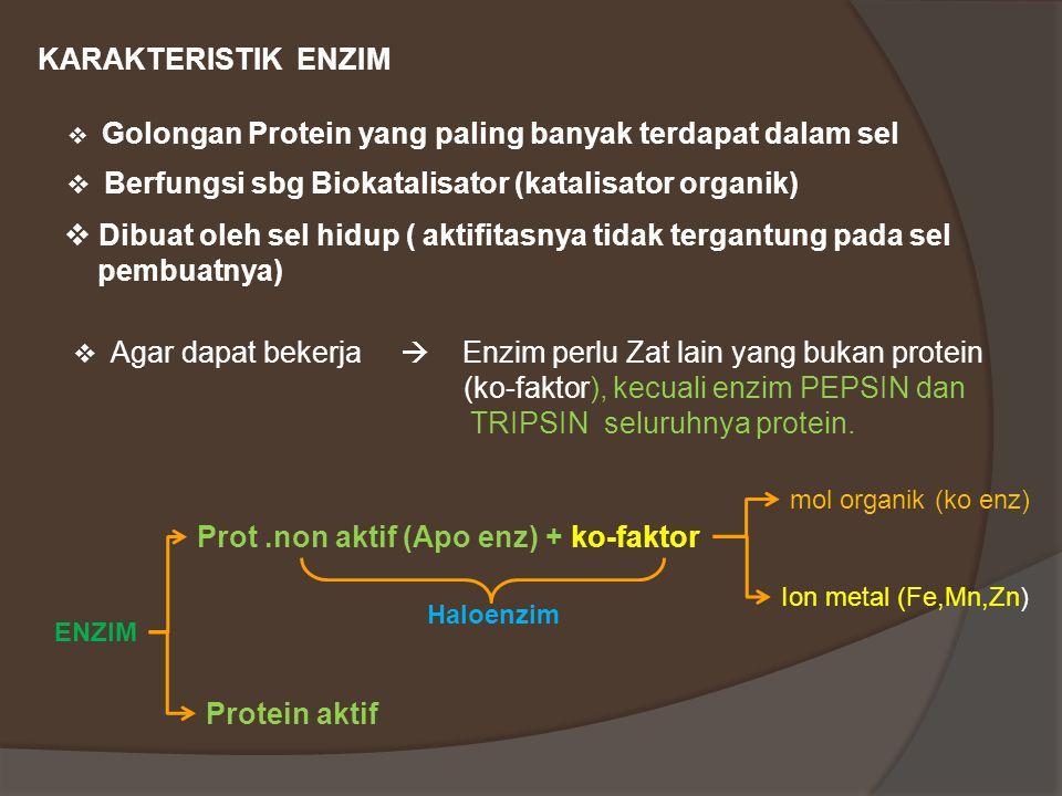 KARAKTERISTIK ENZIM  Golongan Protein yang paling banyak terdapat dalam sel  Berfungsi sbg Biokatalisator (katalisator organik)  Dibuat oleh sel hidup ( aktifitasnya tidak tergantung pada sel pembuatnya)  Agar dapat bekerja  Enzim perlu Zat lain yang bukan protein (ko-faktor), kecuali enzim PEPSIN dan TRIPSIN seluruhnya protein.