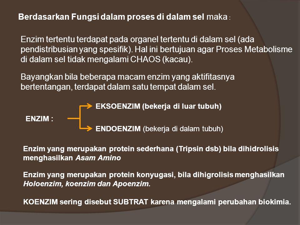 PENDISTRIBUSIAN ENZIM DI DALAM SEL  Enzim yang berperan pada biosintesis Protein, terdapat dalam RIBOSOM dan NUKLEUS  Enzim yang berperan pada Pemecahan Protein, terdapat dalam LISOSOM  Enzim tertentu yang spesifik, diproduksi oleh organtertentu mis :  LPL (Lipo Protein Lipase), oleh sel2 Endothel dinding pemb.darah  αAmilase, oleh kel.