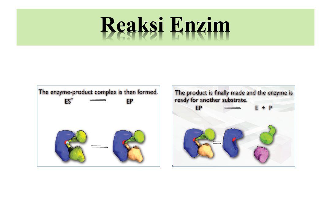 Leonor Michaelis & Maud Menten Persamaan Michaelis-Menten: V 0  Laju/kecepatan awal enzim Vmaks  Laju/Kecepatan maksimum enzim Km  Konstanta Mechaelis-Menten (konsentrasi substrat pada saat kecepatan setengah dari Vmaks) [S]  Konsentrasi Substrat