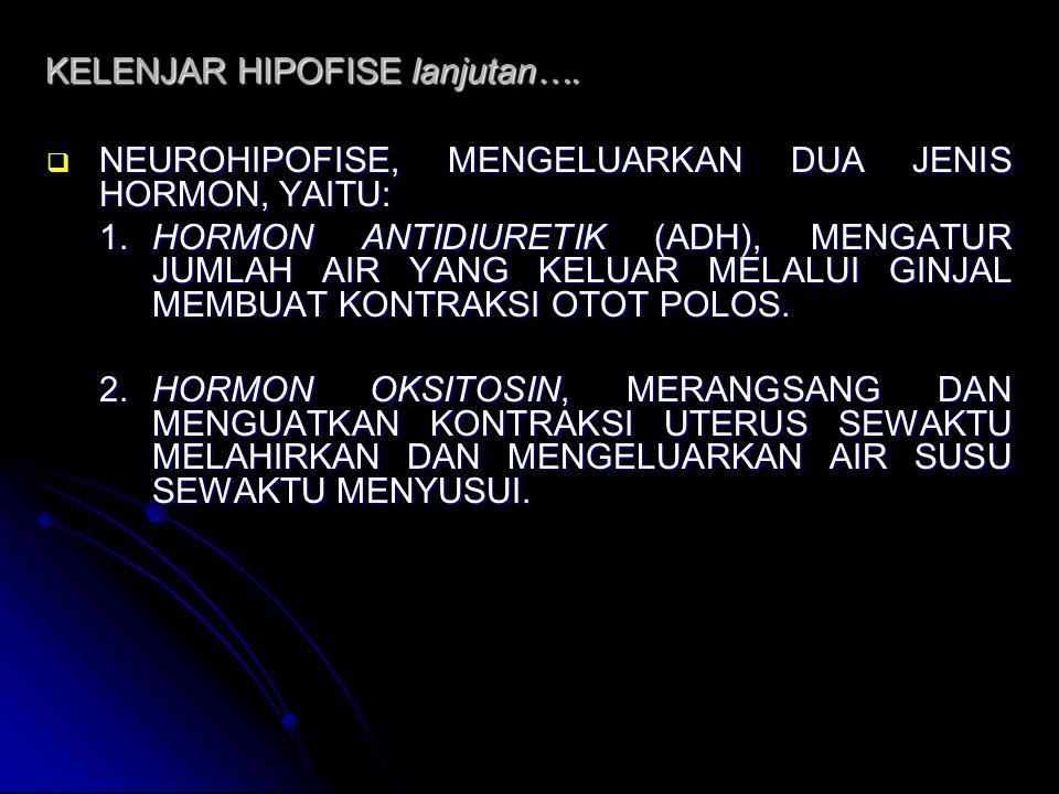KELENJAR HIPOFISE lanjutan….  NEUROHIPOFISE, MENGELUARKAN DUA JENIS HORMON, YAITU: 1.HORMON ANTIDIURETIK (ADH), MENGATUR JUMLAH AIR YANG KELUAR MELAL