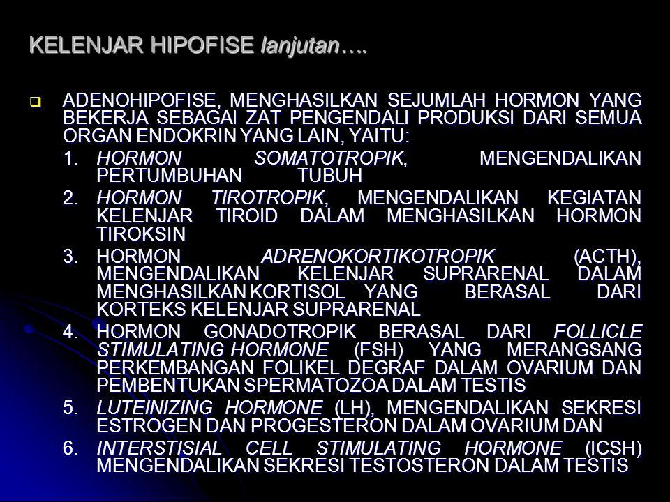 KELENJAR HIPOFISE lanjutan….  ADENOHIPOFISE, MENGHASILKAN SEJUMLAH HORMON YANG BEKERJA SEBAGAI ZAT PENGENDALI PRODUKSI DARI SEMUA ORGAN ENDOKRIN YANG