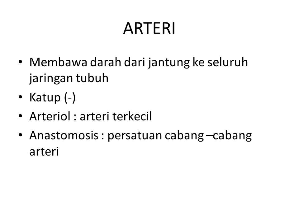 ARTERI Membawa darah dari jantung ke seluruh jaringan tubuh Katup (-) Arteriol : arteri terkecil Anastomosis : persatuan cabang –cabang arteri